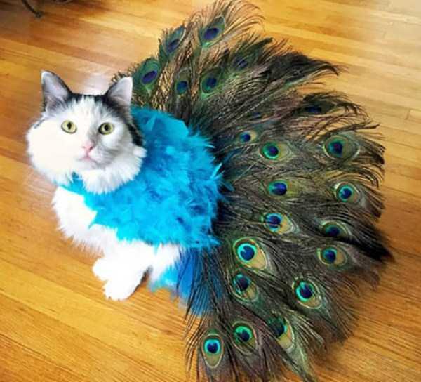 cats-halloween-costumes-19
