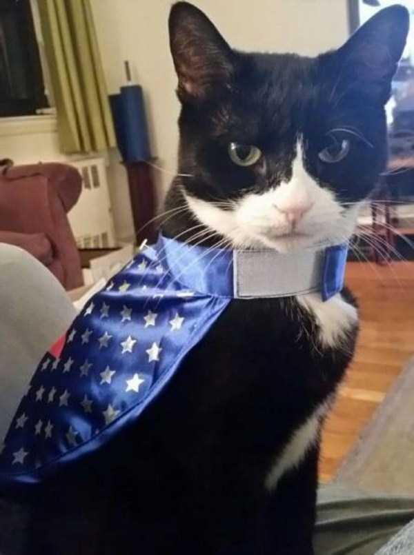 cats-halloween-costumes-2