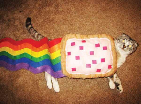 cats-halloween-costumes-21