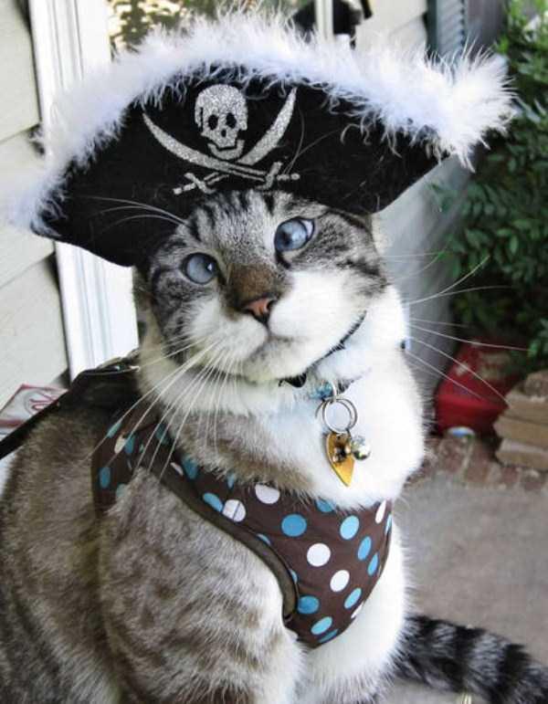 cats-halloween-costumes-22