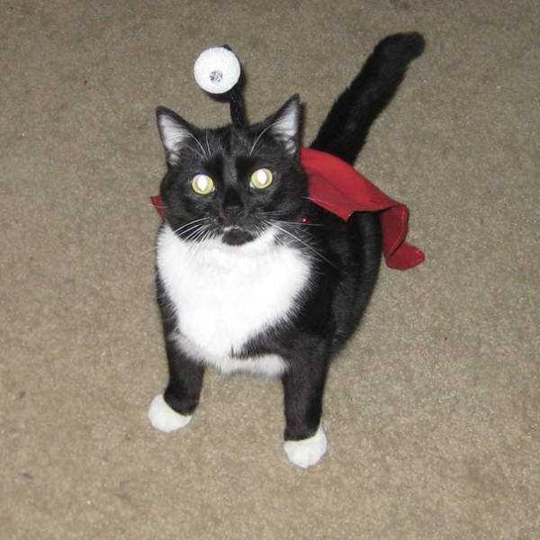 cats-halloween-costumes-23