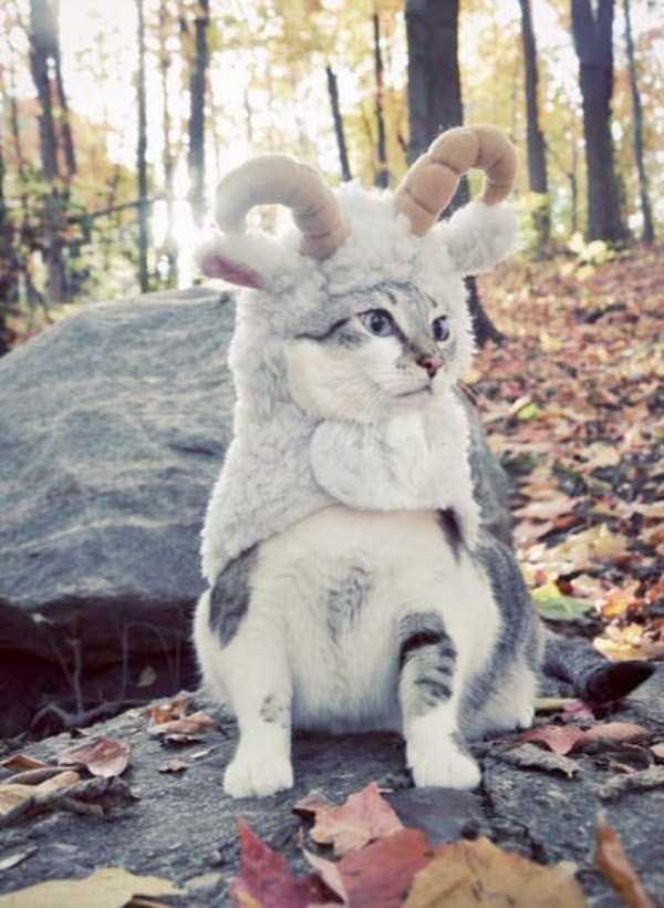 cats-halloween-costumes-24