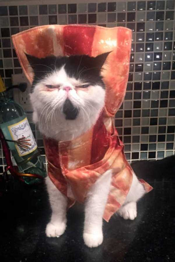 cats-halloween-costumes-26