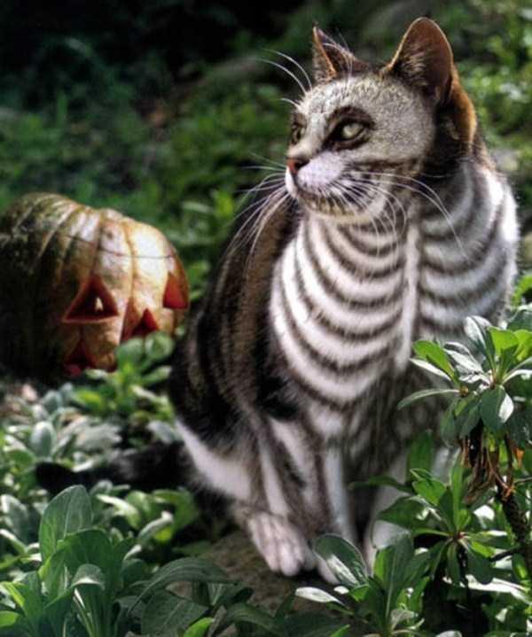 cats-halloween-costumes-27