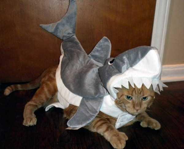 cats-halloween-costumes-28