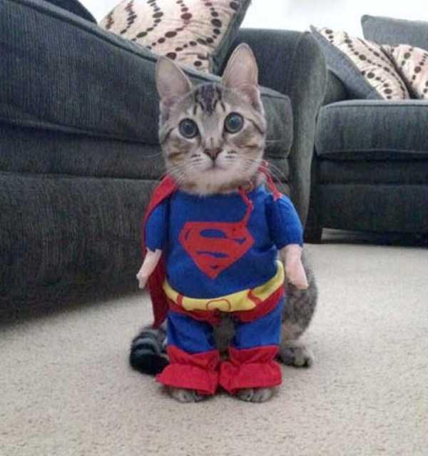 cats-halloween-costumes-29
