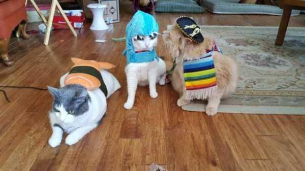 cats-halloween-costumes-3