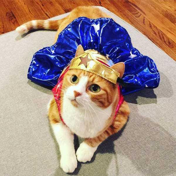 cats-halloween-costumes-30