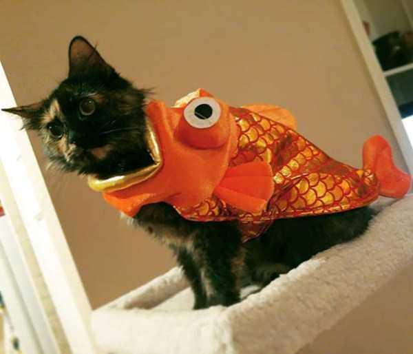 cats-halloween-costumes-32
