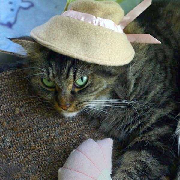 cats-halloween-costumes-33