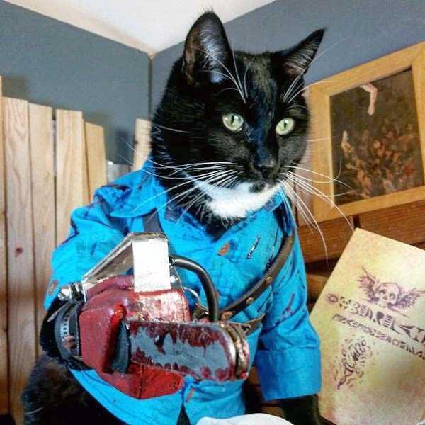 cats-halloween-costumes-35