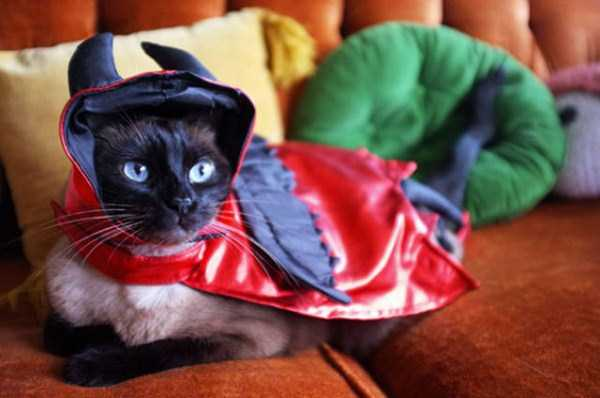 cats-halloween-costumes-37