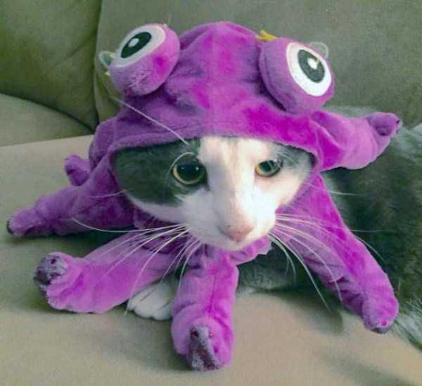 cats-halloween-costumes-39
