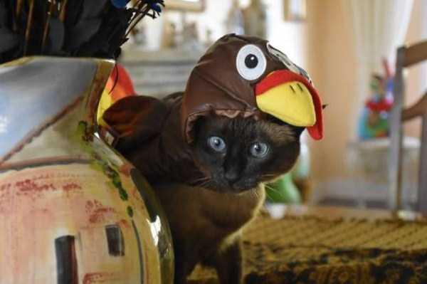 cats-halloween-costumes-4