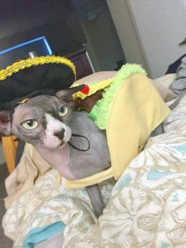 cats-halloween-costumes-40