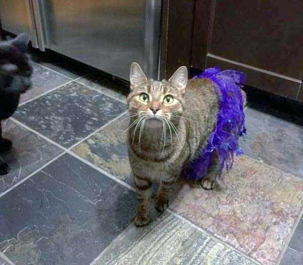 cats-halloween-costumes-41