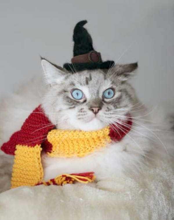 cats-halloween-costumes-42