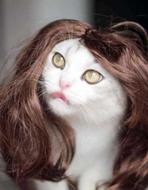 cats-halloween-costumes-43