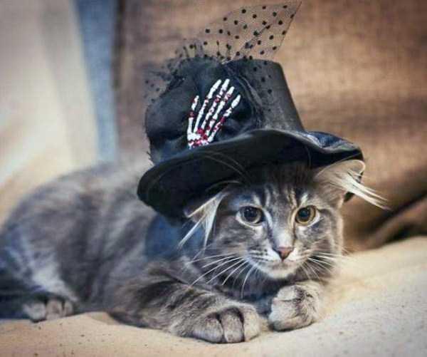 cats-halloween-costumes-44