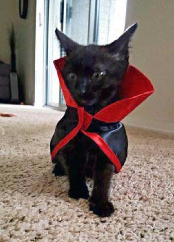 cats-halloween-costumes-45