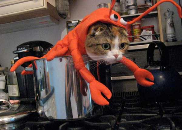cats-halloween-costumes-6