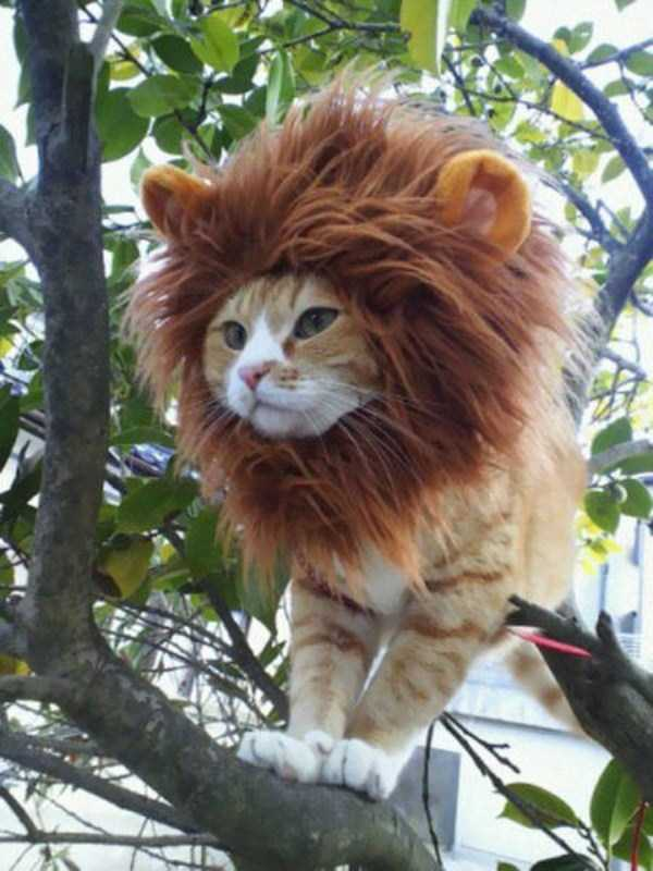 cats-halloween-costumes-9