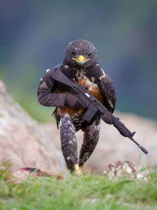 confident-hawk-photoshop-battle-11
