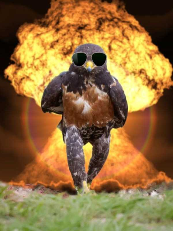 confident-hawk-photoshop-battle-12