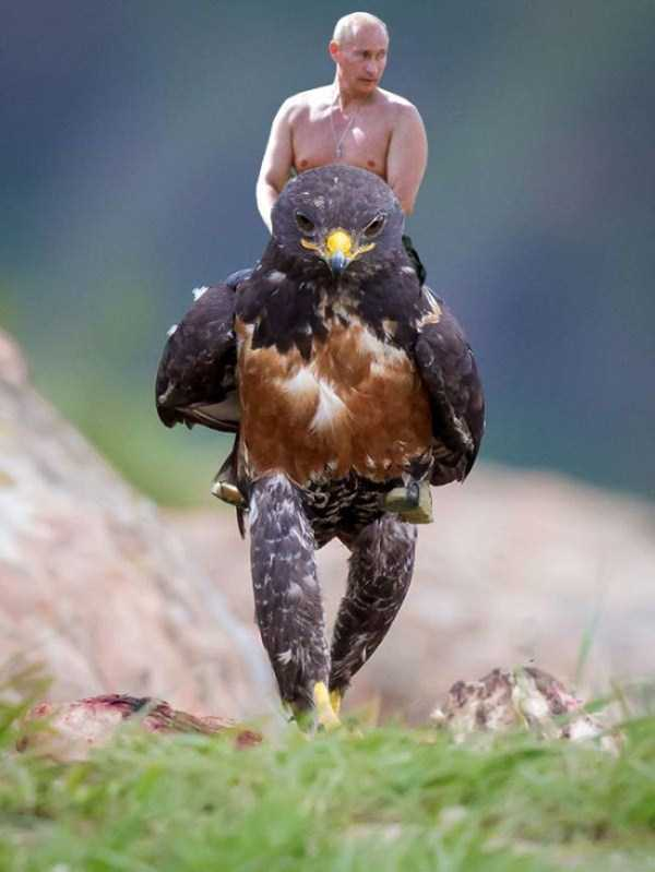 confident-hawk-photoshop-battle-15