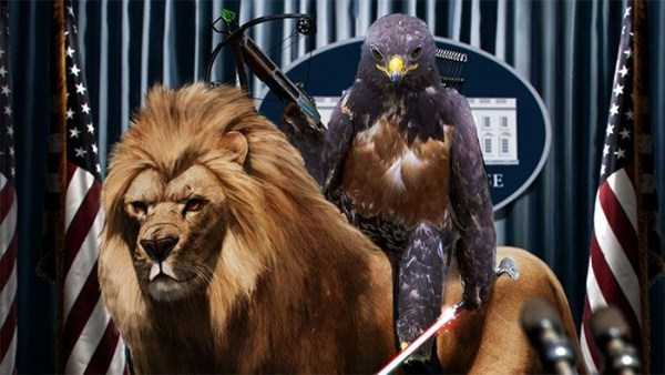 confident-hawk-photoshop-battle-23