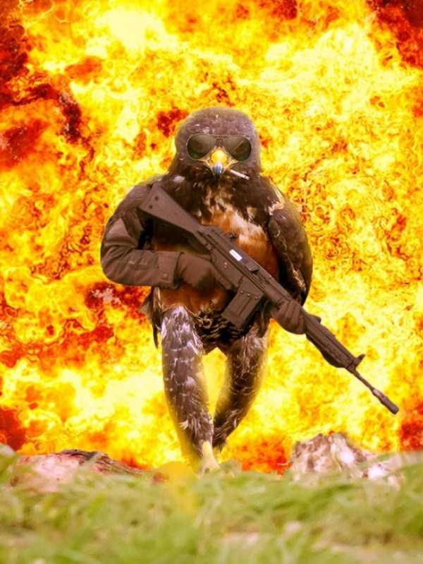 confident-hawk-photoshop-battle-44