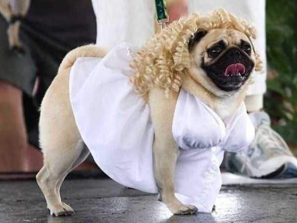 dogs-halloween-costumes-1