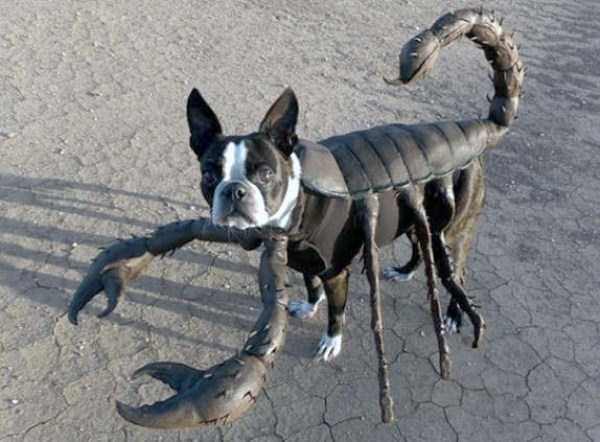 dogs-halloween-costumes-14