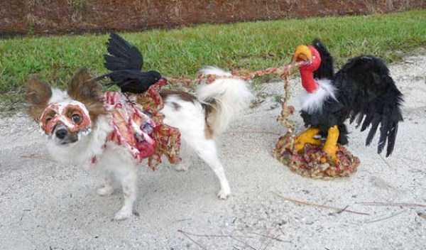 dogs-halloween-costumes-15