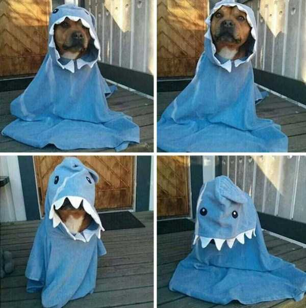 dogs-halloween-costumes-17