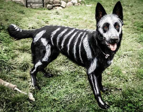 dogs-halloween-costumes-18