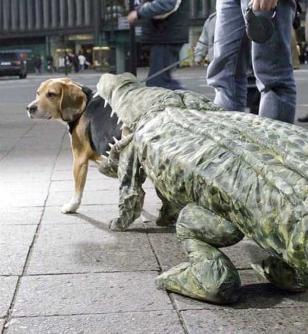 dogs-halloween-costumes-2