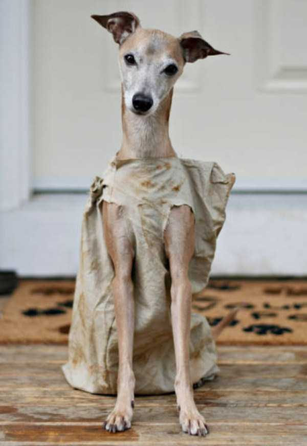 dogs-halloween-costumes-20