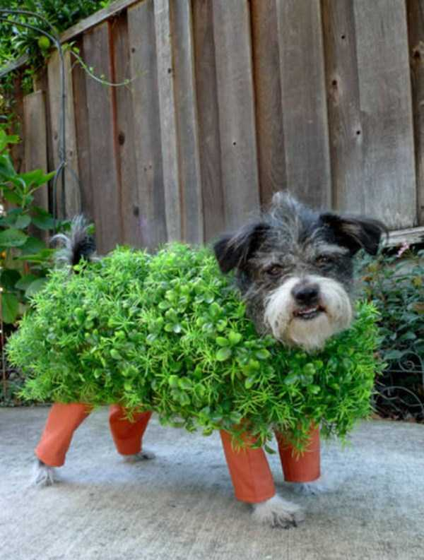 dogs-halloween-costumes-22