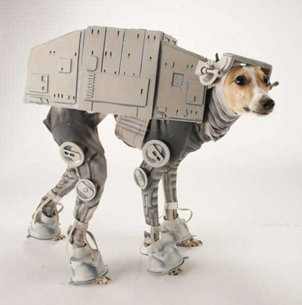 dogs-halloween-costumes-23