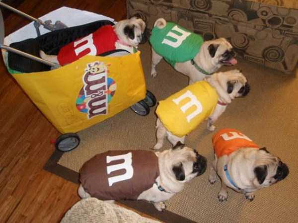 dogs-halloween-costumes-24