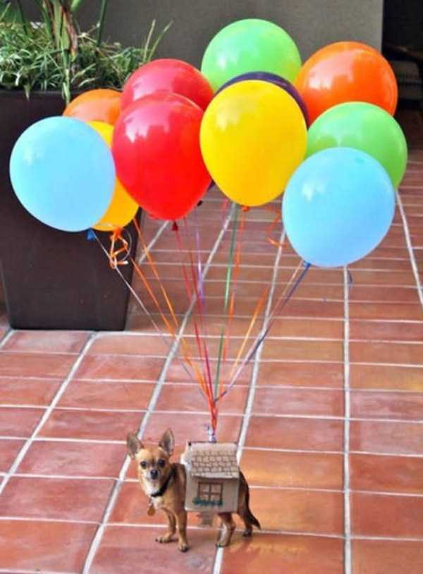 dogs-halloween-costumes-26
