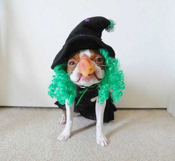 dogs-halloween-costumes-27