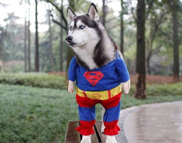dogs-halloween-costumes-29