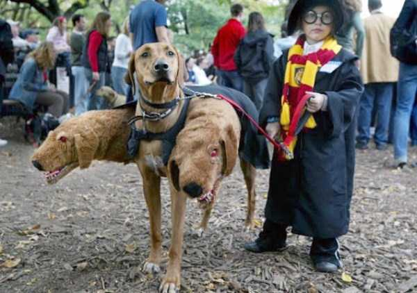 dogs-halloween-costumes-3