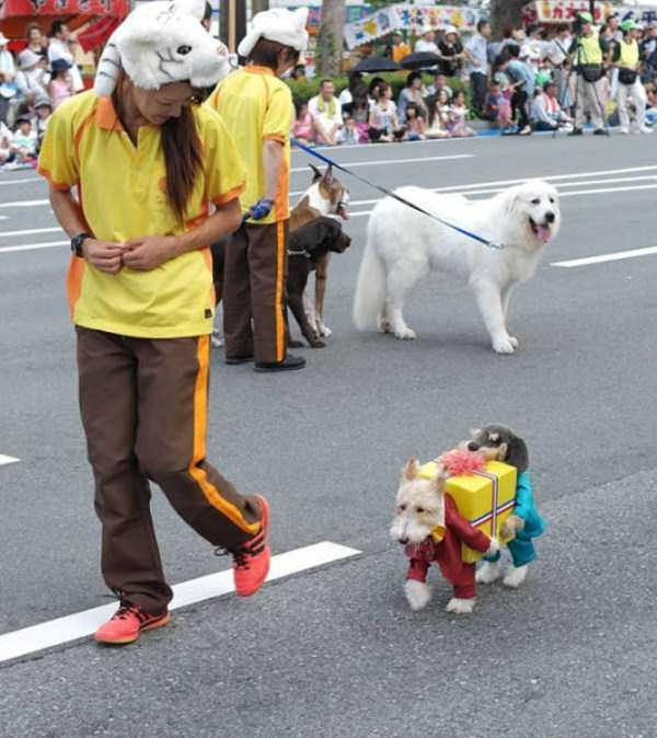dogs-halloween-costumes-30