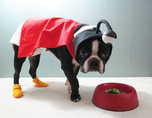 dogs-halloween-costumes-31