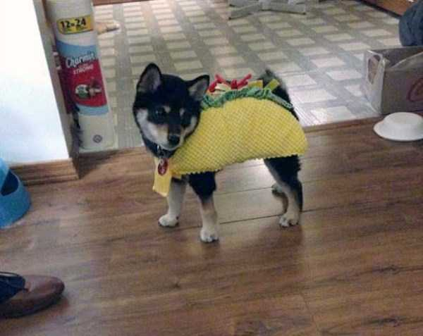 dogs-halloween-costumes-33