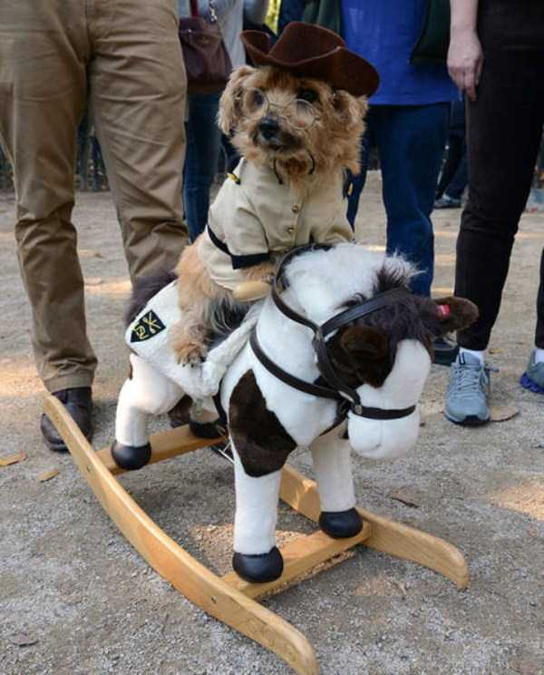 dogs-halloween-costumes-34