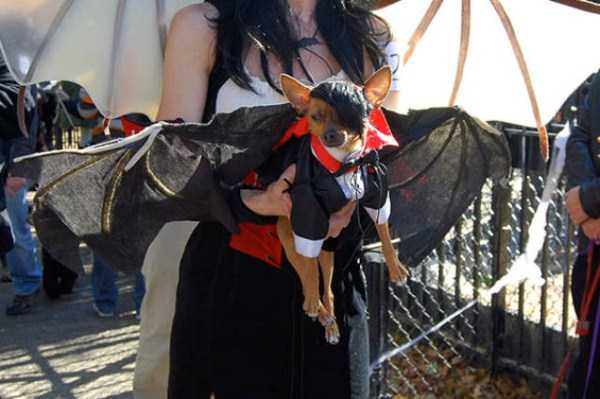 dogs-halloween-costumes-41